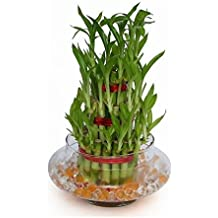 """SMZ Brandlines - 3 Layer 4"""" 6"""" 8"""" Top Quality Lucky Bamboo For Feng Shui (Total About 38 Stalks) (Bamboo)"""