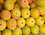 Live Alphonso Mango Plant