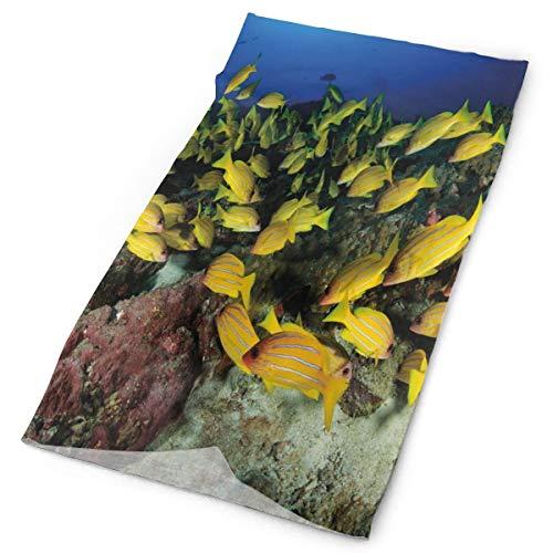 Magic Headwear Outdoor Scarf Headbands Bandana,Tropical Fish On A Coral Reef Hawaiian Ocean Floor Environment Animals In World,Mask Neck Gaiter Head Wrap Mask Sweatband