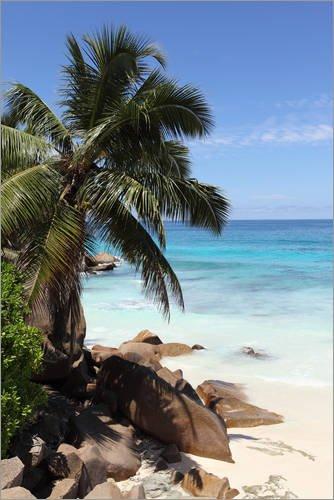 Posterlounge Alubild 60 x 90 cm: Palmenstrand auf den Seychellen von Catharina Lux/Mauritius Images