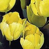 1art1 5283 Pedro Siena - Untitled (5283) Poster Kunstdruck