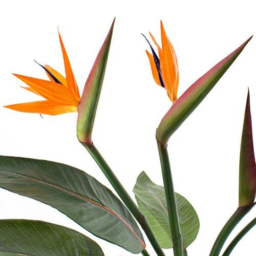 artplants – Künstlicher Strelizie-Busch Nubia mit 8 Blättern, 2 Blüten, orange, 100 cm – Blumen Kunstpflanze/Deko Strelitzie