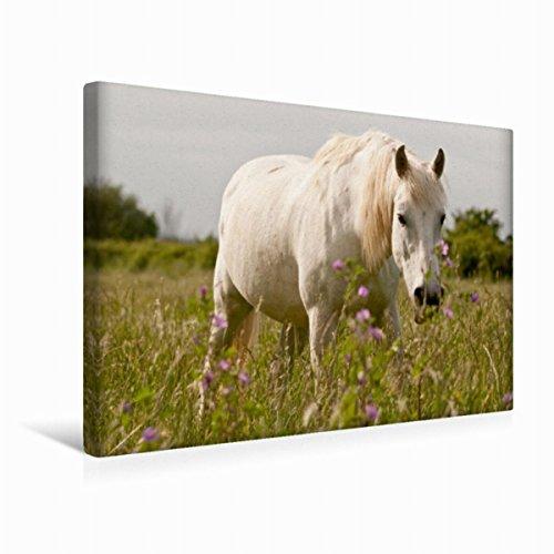 Premium Textil-Leinwand 45 cm x 30 cm quer Camargue Pferd | Wandbild, Bild auf Keilrahmen, Fertigbild auf echter Leinwand, Leinwanddruck