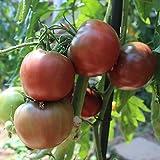 10 Samen Black Krim Tomate – russische Fleischtomate, kältetollerant