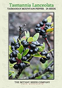 Tasmannia Lanceolata (25) Saatgut - Tasmanier Pfeffer Samen [Tasmanian Mountain Pepper ]