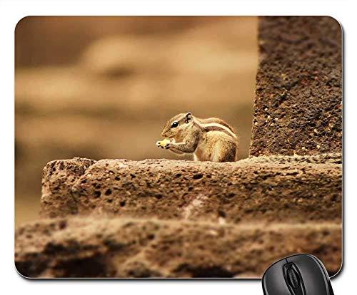 Gaming-Mauspads, Mauspad, Eichhörnchen Cute Small Wildlife Wild Animal Brown