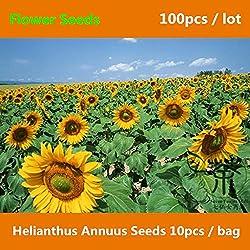 Shopmeeko ^^ Jährliche Pflanze Helianthus Annuus ^^^^ Für das Pflanzen von 100 Stück, Zierpflanzen der Blume ^^^^, Neuartige Pflanze Gemeinsame Sonnenblume ^^^^