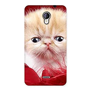 Cute Kitty In Red Fur Back Case Cover for Micromax Unite 2 A106