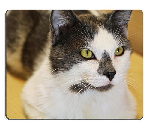 jun-xt-mousepad-kamil-scat-petsmart-adoption-centre-june-6-2016-natural-rubber-material-image-272501