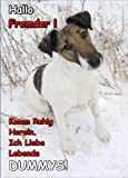 INDIGOS UG - Türschild FunSchild - SE498 - ACHTUNG Hund Foxterrier - für Käfig, Zwinger, Haustier, Tür, Tier, Aquarium - DIN A4 PVC 3mm stabil