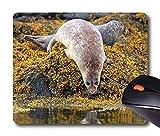 Günstigen Preis Mousepad Rechteck Non Slip Gummi Persönlichkeit Desings Tier: Skye Scotland Seal