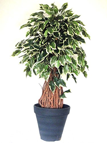 NEU: Exklusiver künstlicher Ficus Benjamini Gilberto ca. 100 cm mit Naturstamm getopft!