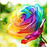 yeesam Art neuen 5D Diamant Painting Kit – Colorful Rose – DIY Kristall Diamant Strass Gemälde eingefügt Malen nach Zahlen Kits Kreuzstich Stickerei