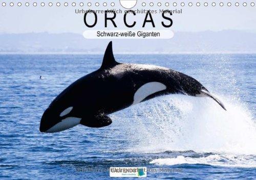 Orcas: Schwarz-weiße Giganten (Wandkalender 2014 DIN A4 quer): Majestätische Meeresakrobaten (Monatskalender, 14 Seiten)