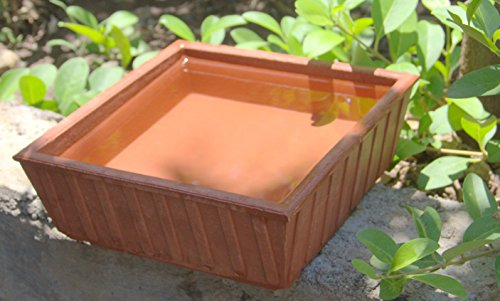 Nature Forever Earthen Pot (Teracotta Bird Bath) - 8 inch x 8...