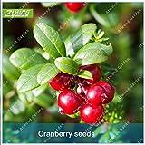 Shopmeeko SEEDS: ZLKING 100 Pcs Cranberry organische nicht-GMO Anti-Ageing Oxidation zu verhindern Fruit Topfpflanzen Blüten Bonsai