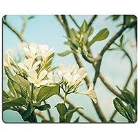 Luxlady Natural rubber Mousepads Image ID 31094769frangipani o pagoda albero o albero tempio fiore nel giardino o nature vintage