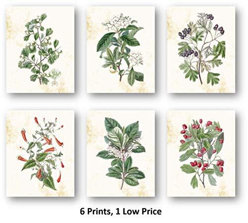 Ramini Brands Botanische Blumen, Kunstdruck, für Wohnzimmer, Schlafzimmer, Dekorationsdrucke - Set mit 6 Stück, 8 x 10 ungerahmt, tolles Geschenk für Zuhause oder Büro - 6 Stück Schlafzimmer Set