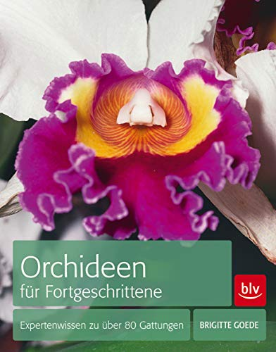 Orchideen Orchideen pflegen: