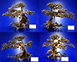 Aqua-Bonsai Wurzel Medium - Aquascaping...