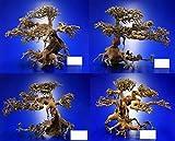 Aqua-Bonsai Wurzel Small - Aquascaping Drachenbaum Traumwurzel Klein