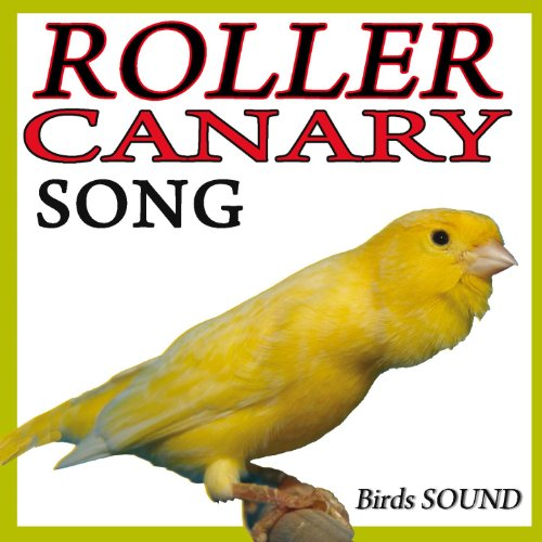 birds voice mp3