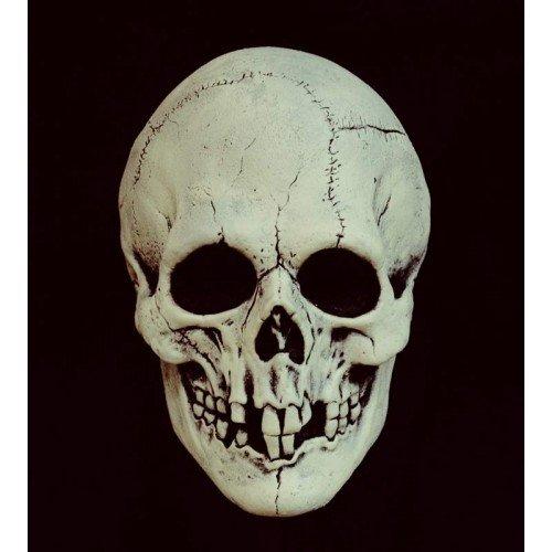 Mask Head Night Owl Skull Black & (Owl Mask Nite)