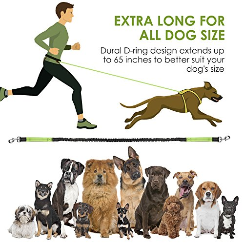 Hands-Free-Dog-Leash-KiddyWoof-Dog-Lead-Dog-walking-Belt-Training-Lead-Dual-Bungees-Up-to-150lbs-for-All-Size-Dogs-with-Adjustable-Waist-Belt-for-Outdoor-Running-Walking-Jogging-Hiking-Black-and-Green