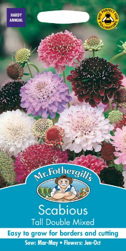 Mr Fothergills Pilzsporen, Blume Witwenblume hoch Double, Mischung, 50 Samen