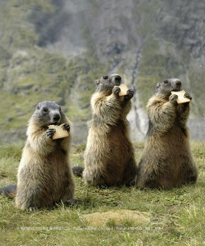 inkognito-cleaning-cloth-for-spectacles-marmots-the-snack-by-rannenberg-und-friends