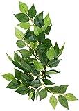 Exo Terra Regenwaldpflanze Ficus klein