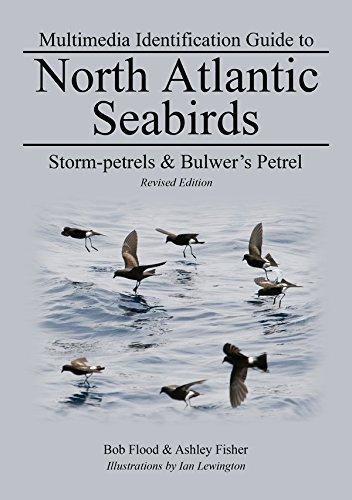 Storm-petrels & Bulwer's Petrel: North Atlantic Seabirds (Multimedia ID Guides to North Atlantic Seabirds) (English Edition)