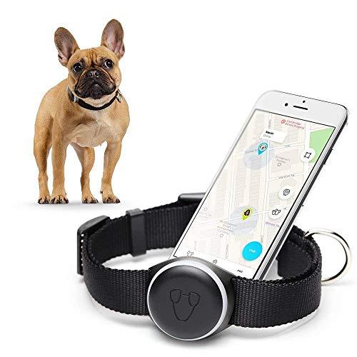 Mishiko collare localizzatore per cani i gps integrato i activity tracker i diagnostica stato fisico | versione 2 potenziata – nero
