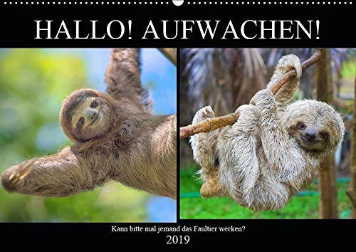 Hallo! Aufwachen! Kann bitte mal jemand das Faultier wecken? (Wandkalender 2019 DIN A2 quer): Abhängen! Das ganzes Leben lang! (Monatskalender, 14 Seiten ) (CALVENDO Tiere)