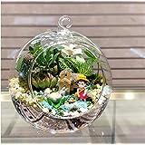 Naisicatar Plantas Accesorio en Forma de Globo de la Bola de la decoración Transparente Claro florero de Cristal Colgante Flo