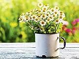 Artland Qualitätsbilder I Glasbilder Deko Glas Bilder 80 x 60 cm Botanik Blumen Gänseblümchen Foto Grün B6VG Schöner Frühlingsgarten mit Gänseblümchen