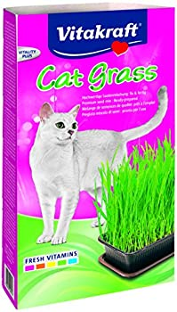 Vitakraft 24031 - Herbe à Chat - Cat-Gras