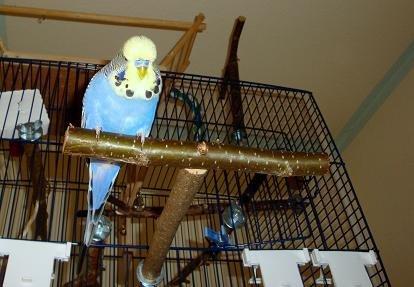 Basis Käfigausstattung mit viel Natur- Vogelzubehör, Vogelspielzeug, Sitzstangen, Sitzbrett, Schaukel, uvm