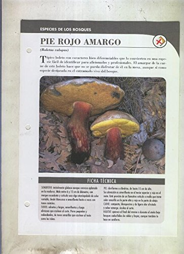 Bolets ficha 079: Piel rojo amargo (Boletus calopus)