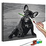 murando - Malen nach Zahlen Hund Bulldog 50x40cm Malset DIY n-A-0253-d-a