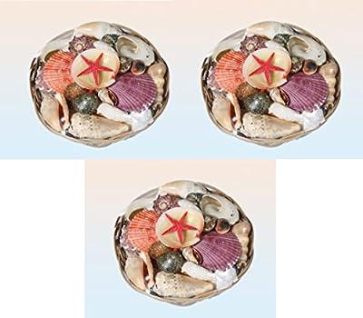 Muscheln Deko ca. 390 Gramm im Korb verschiedene Größen und Formen 3 Stück