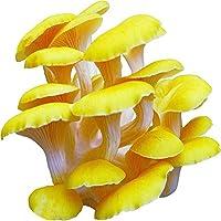 Pinkdose1: Davitu 50Pcs / Pack Organic Mushroom Seeds Semillas de Verduras comestibles para Plantas Garden Farm Swamm - (Color: 1)