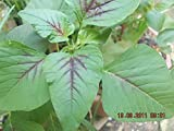 Amaranthus Tricolor, Chinese Spinach, Calaloo Green Giant, 5g approx 6000 seeds, untreated