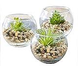 TIED RIBBONS Set of 3 Decorative Terrarium Container Vase with Artificial Succulent Plant