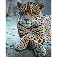Frameless Painting by Numbers Paint by Numbers for Home Decor for Living Room 40 * 50Cm Leopard