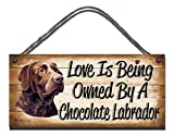 Birthday occasion Chocolate Labrador Wooden Funny Sign Wall - Best Reviews Guide