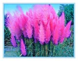 Shopmeeko 2 Stk. Clematiszwiebeln, Clematisbaumzwiebeln Gartenpflanzen, mehrjährige Pflanzung seltene Blumenzwiebeln für Blumentopf: 2