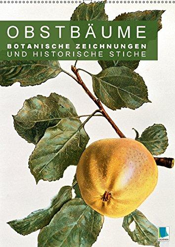 obstbaume-botanische-zeichnungen-und-historische-stiche-wandkalender-2017-din-a2-hoch