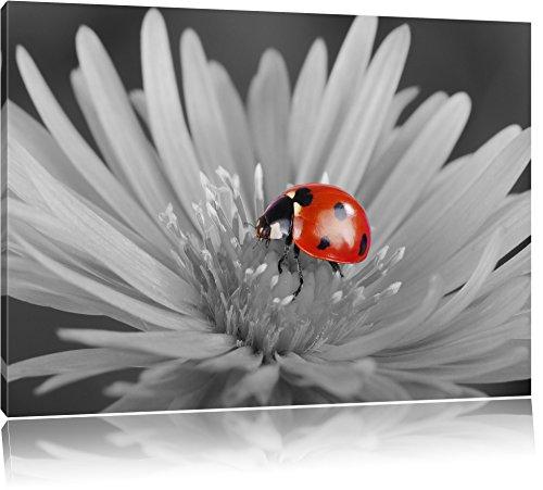 rot leuchtender Marienkäfer auf Blüte schwarz/weiß Format: 100x70 auf Leinwand, XXL riesige...