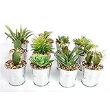 Qualität Set Von 6–Kleine künstliche Sukkulente/Cactus Zimmerpflanzen, in Silber verzinkt Eimer/Pflanztopf mit Pebble Detail–14cm ca.–6pflanzen Lieferung
